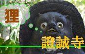 タヌキ伝説が伝わる童謡「証城寺の狸囃子」の舞台『證誠寺』へ潜入調査!