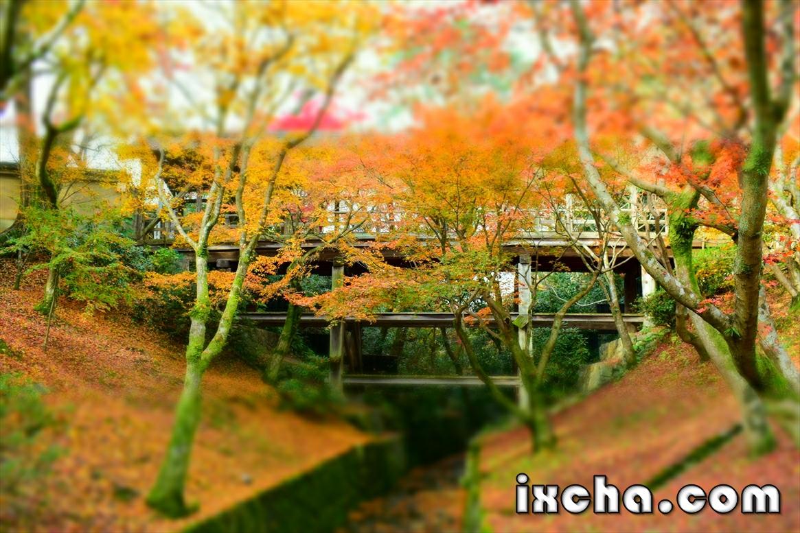 東福寺 橋 紅葉