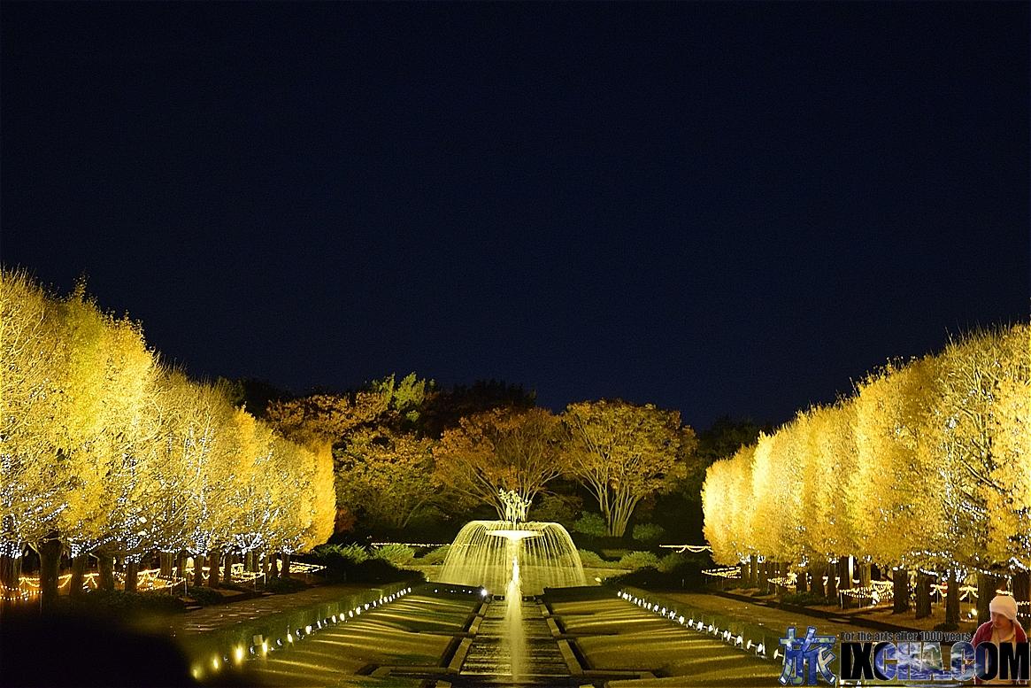 国営昭和記念公園 ライトアップ