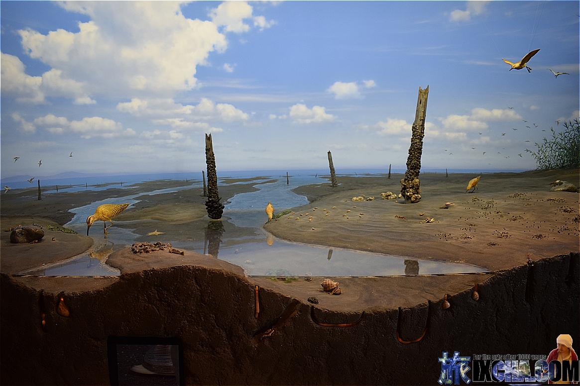 浦安の海の生態