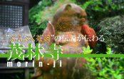 """おとぎ話""""ぶんぶく茶釜""""が伝わる、群馬県館林市の『茂林寺』に行ってみた"""