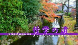 紅葉の季節に京都を代表する散策路として知られる『哲学の道』を歩いてみた